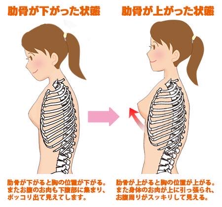 肋骨が下がった状態と上がった状態の比較図